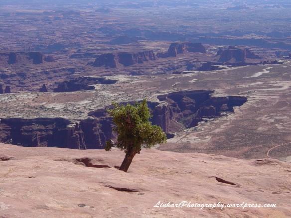 Grand Mesa Point - Lone Tree