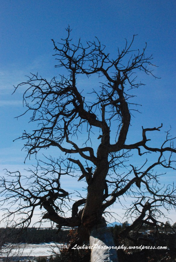 Castlewood Canyon-Tree