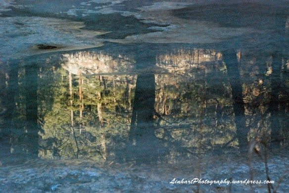 O'Fallon Park-Bear Creek Reflection