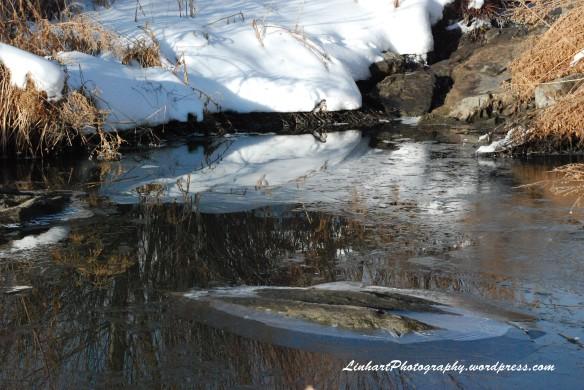 Sanctuary Park Reflection
