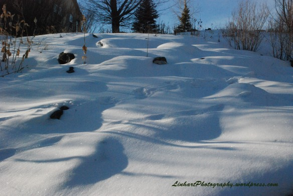 Sanctuary Park Snow