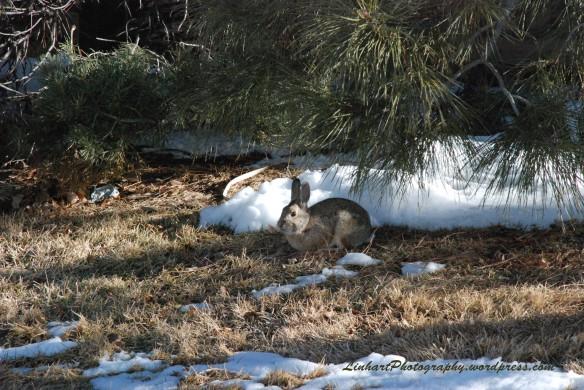 Sanctuary Park Bunny