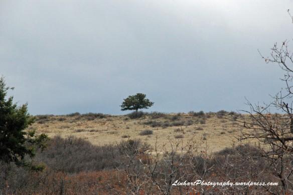 Ridgeline Open Space-lone tree
