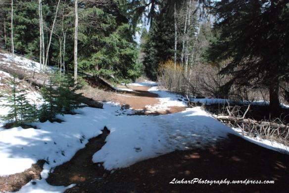 Maxwell Falls-Trail
