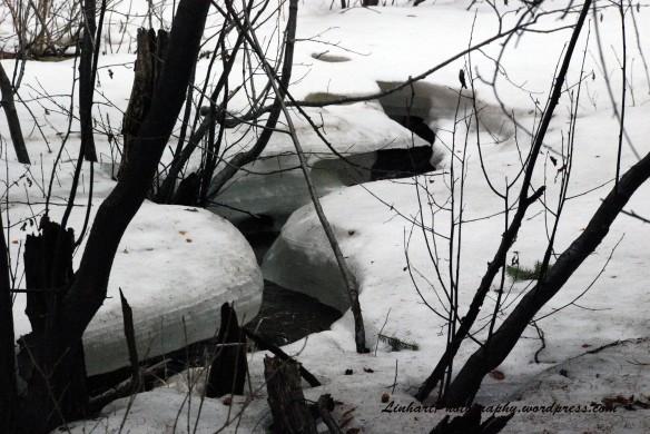 Maxwell Falls-ice