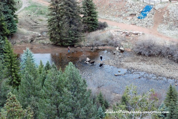 Pine Valley Ranch-Dogs in River