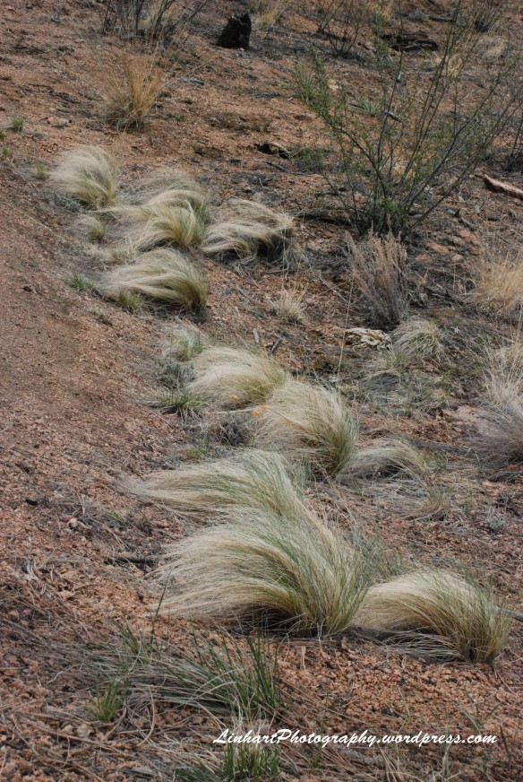 Pine Valley Ranch-Grass Tufts