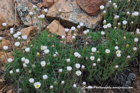 Staunton State Park-Wildflowers