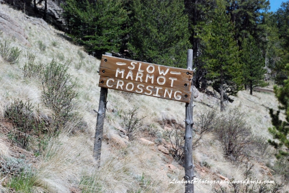 Staunton State Park-marmot crossing sign