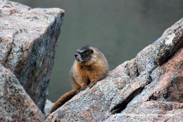 Staunton State Park-marmot