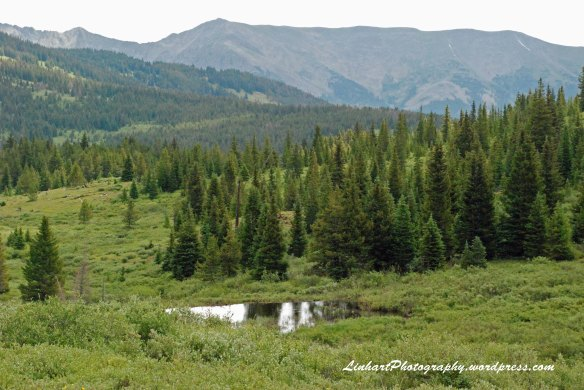 Wilder Gulch-Beaver Pond
