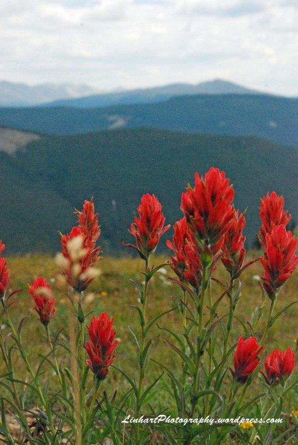 Fowler-Hilliard Hut-Wildflowers