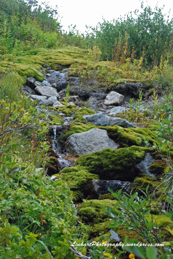 Wheeler Lake-mossy stream