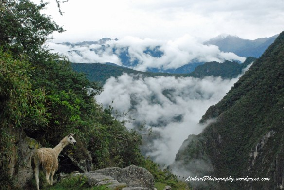Machu Picchu-llama
