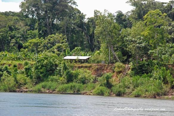 Peru-Jungle