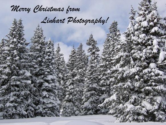 IMG_7033e-Merry Christmas